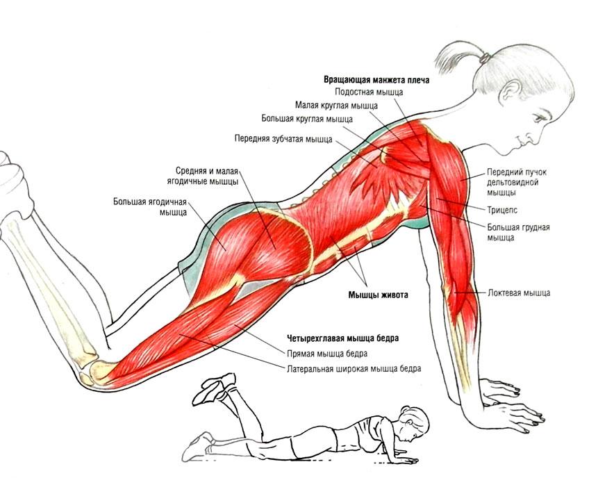 Упражнения грудные мышцы в домашних условиях девушке