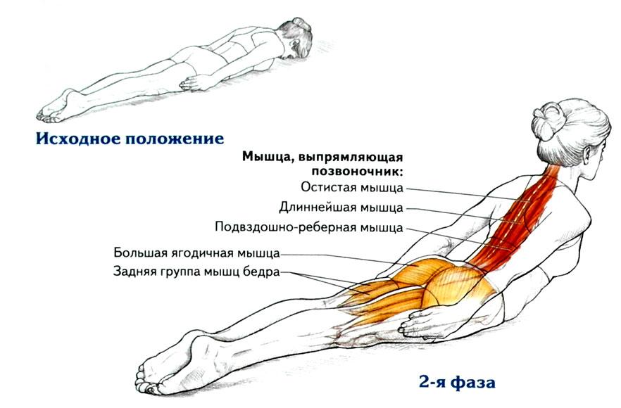 Мышцы спины упражнения в домашних условиях